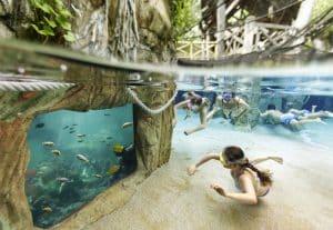 Piscine poissons domaine Bois aux Daims